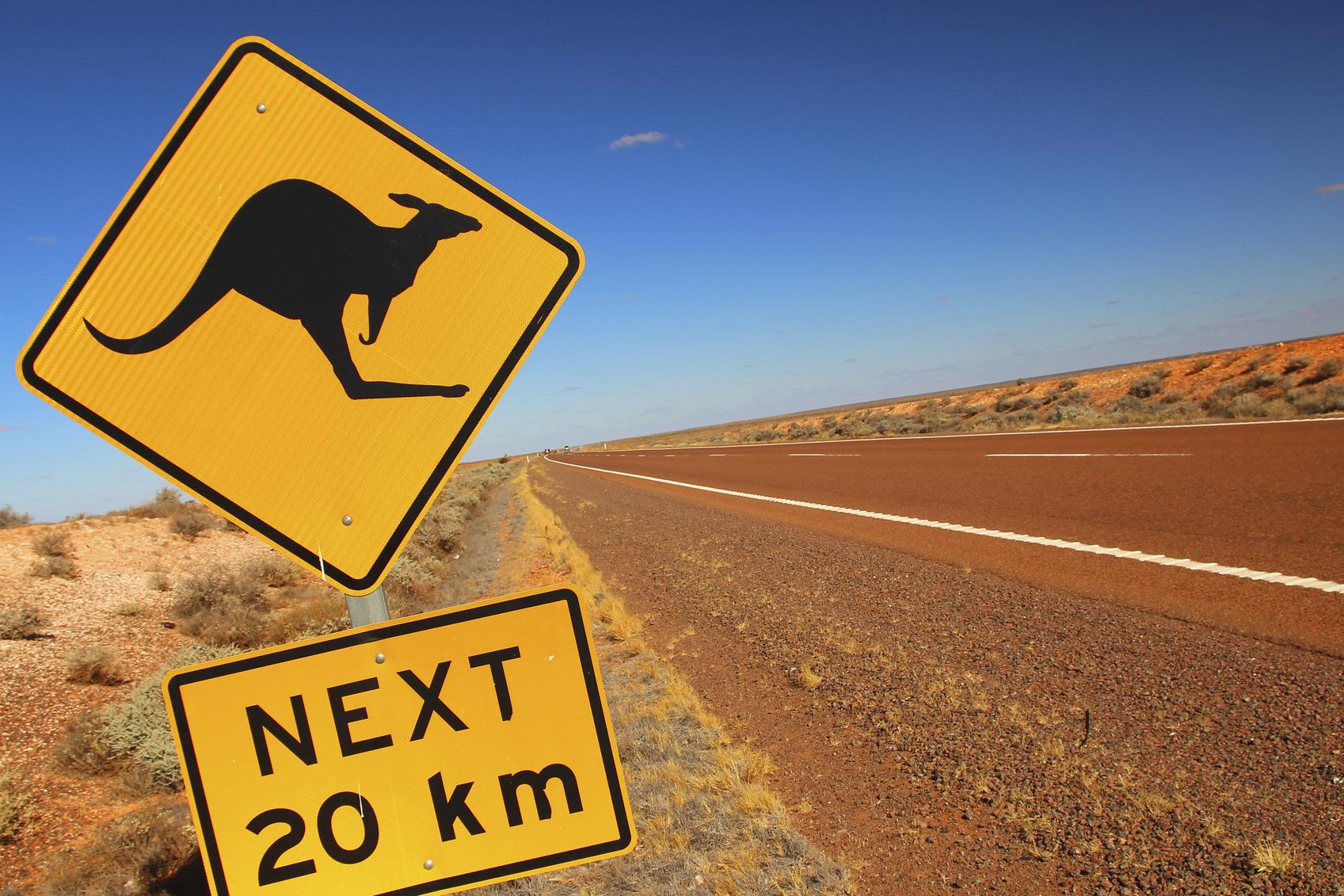 Kangaroos crossing.